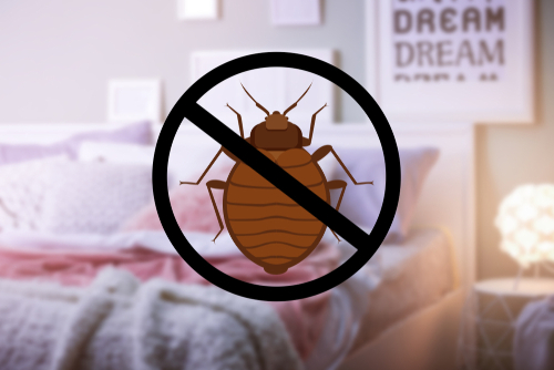 Kick Roaches Out of Your Home